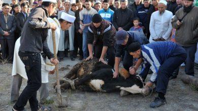 Photo of Быйыл Курман айт майрамы 31-августта же 1-сентябрда белгиленет.