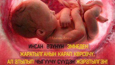 Photo of ИНСАНДЫН ЖАРАЛУУСУ