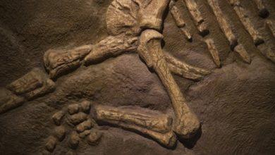Photo of Динозаврлар чын эле болгонбу?
